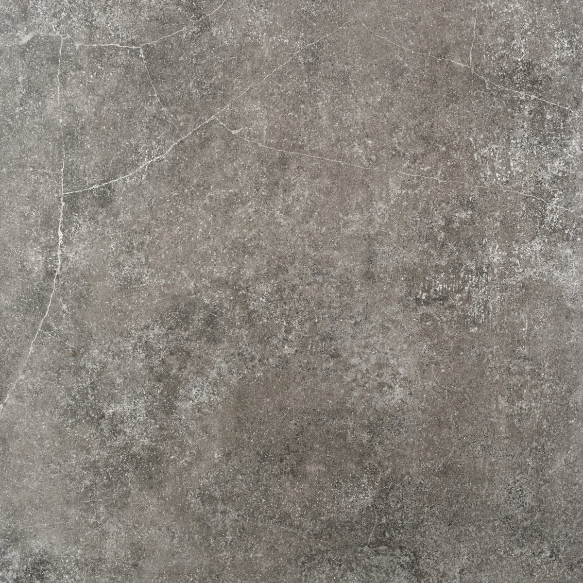 FOTO queens grey ant 75x75 1
